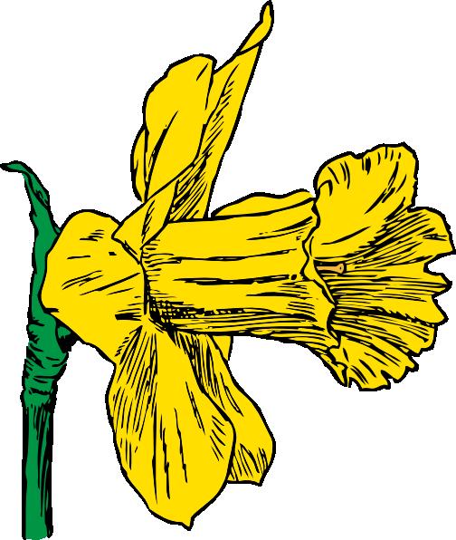 daffodil-flower-clip-art-14