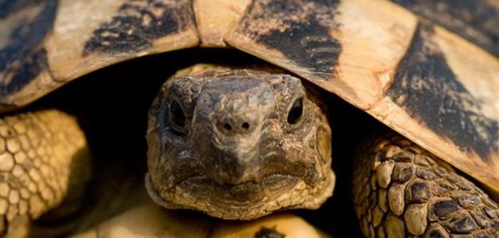 Annabel's blog ~ the Christmas tortoise