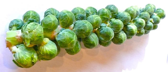 Brilliant ways with sprouts Countrywives online magazine