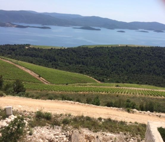 remove vineyard near Dubrovnik