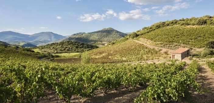 Languedoc countryside & vineyards