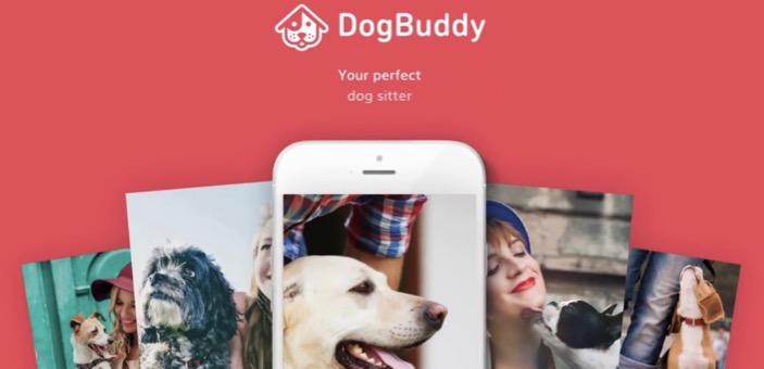 Dog Buddy service / dog sitting or walking