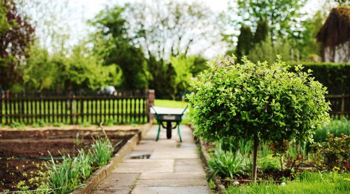 Five Ways to Revamp Your Garden Without Overspending