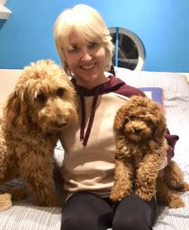 Dogs: Man's best friend - Annabel & her two Doodles