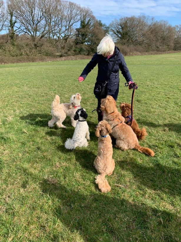 Annabel with all the dogs from post Lockdown: How I am coping with just my Other Half for company