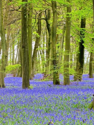 English countryside - Bix Woods, Oxfordshire