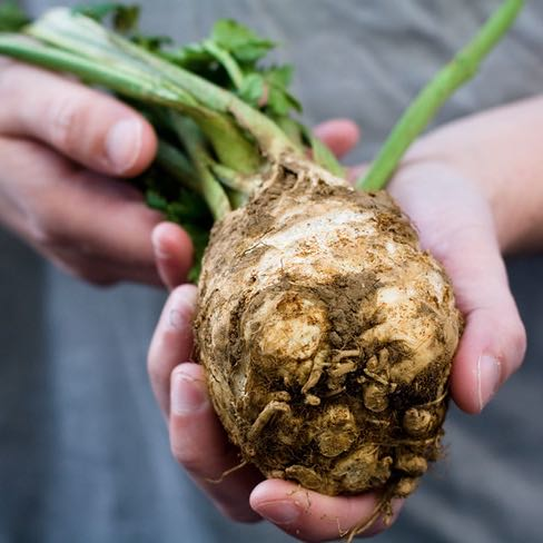 Celeriac - 3 Tasty Recipes using this sweet, nutty Root Vegetable