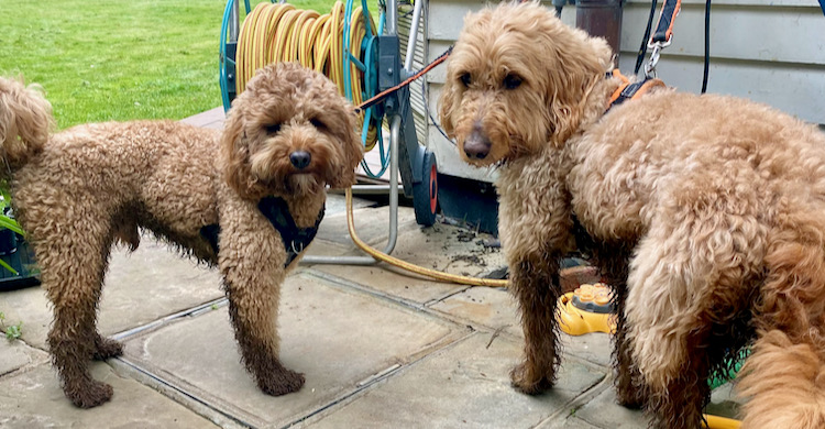 How to deal with dirty dogs in unseasonal wet weather