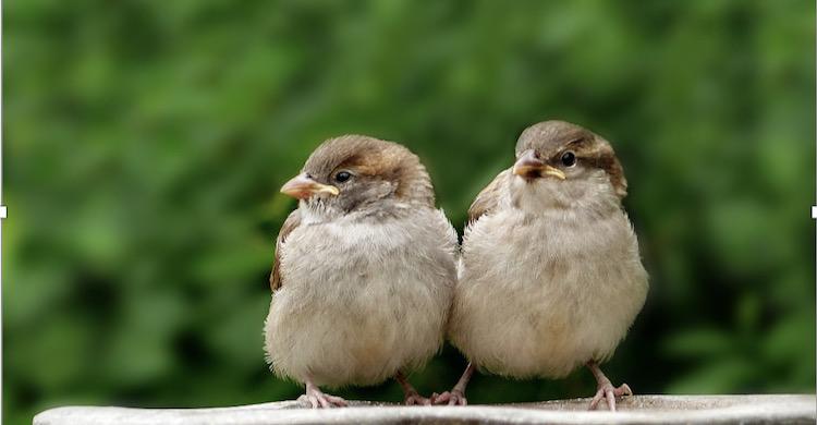 Five Ways To Create A Bird-Friendly Garden & welcome local birdlife